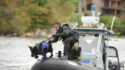 Police Dog Attacked In The Line Of