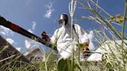 Deux insecticides épinglés pour neurotoxicité