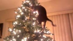 「クリスマスツリーを破壊する猫」の動画