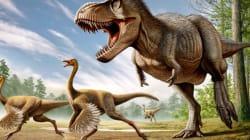 Découverte d'un étrange dinosaure à plumes aux allures de poulet