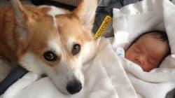 L'attention de ce chien pour ce bébé va vous faire