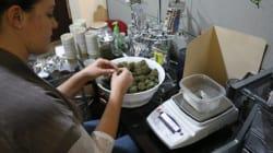 Cannabis: les Etats-Unis ouvrent leurs premiers