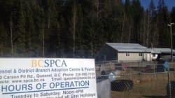 SPCA Donations