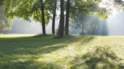 Pourquoi il vaut mieux vivre au vert que gagner au