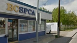 Pet Owners Sue B.C. SPCA After Daycare
