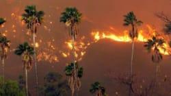 In fiamme le montagne di Los Angeles. Case evacuate