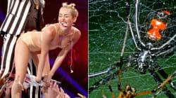 Why Spiders 'Twerk' Like