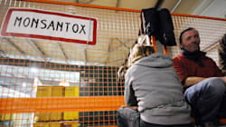 Des anti-OGM délogés d'un site Monsanto qu'ils