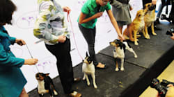 Elite Westminster Dog Show Opens Doors To Mutts In