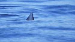 Un plongeur néo-zélandais repousse un requin au couteau et va boire une