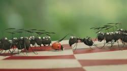 Pourquoi l'animation française se porte si