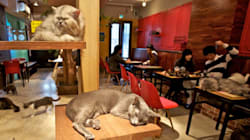 In Need Of Purr Therapy? Montreal's Cat Cafe To Provide Furry