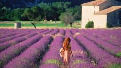 Un été en Provence, ou les souvenirs d'enfance de Rose
