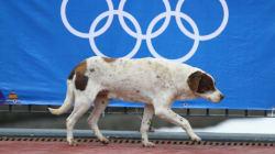 ソチ当局が野良犬を大量駆除