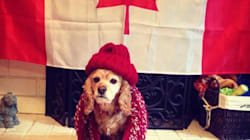 Meet B.C.'s Most Patriotic