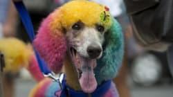 Tutti pazzi per il carnevale di Rio!