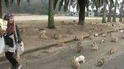 Pourchassés par des hordes de lapins
