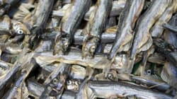 Halibut Fishermen Suing
