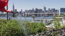 Agriculture urbaine : ce dont elle est capable (et ce qu'elle ne pourra jamais