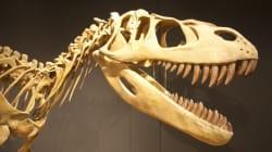 Des paléontologues découvrent le crâne d'un rare dinosaure en