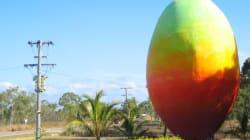 Le vol de la mangue géante australienne a été