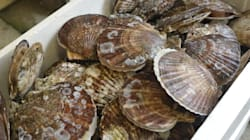 B.C. Shellfish Die-Off Illustrates A Future We Must