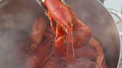 Les homards souffrent-ils lorsqu'on les plonge dans l'eau