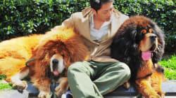 Un chien vendu pour 2 millions $ en