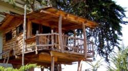 Les 11 plus belles cabanes dans les