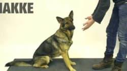 Comment les chiens réagissent-ils à la magie?