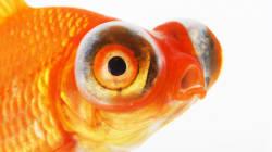 Se faire battre par un poisson