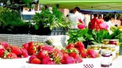 B.C. Food Security Threatened By ALC Bill