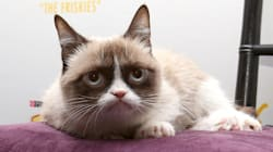 Grumpy Cat: sa fortune «grandement