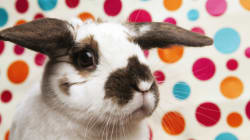8 Ways To Make Easter More Exciting As An