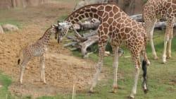 Meurtres en série au Zoo de