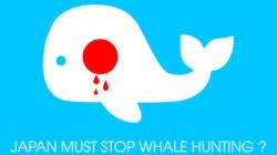 Baleines: la fin d'une tradition et d'un