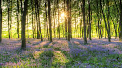We Should Let Nature Thrive in