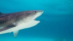 L'épouse de Jim Popp s'est fait mordre par un requin