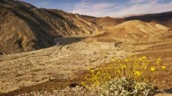 Death Valley: désertique, mais pas