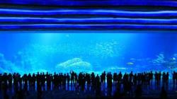 中国にオープンした「世界最大の水族館」【画像集】