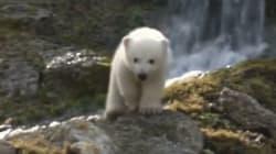 Le baptême des oursons polaires Nobby et Nela attire une foule