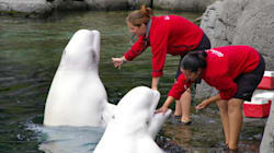 Vancouver Aquarium's Political Gaming Is Legal, But Is It