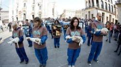 Agnellini morti in piazza Duomo a