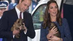 Kate vs. The Puppies vs. Prince