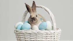 L'œuf ou le lapin? À l'origine de