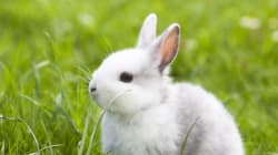 Cruelty-Free Cosmetics Act Will Help Alleviate Animal Suffering In