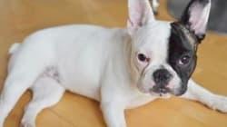 WATCH: Bulldog Grabbed In Alleged