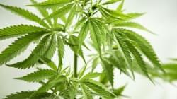 Le cannabis est dangereux pour le cœur des jeunes