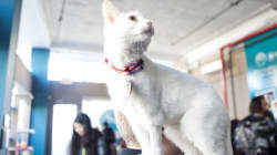Vancouver Cat Cafe Clawing