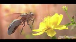 Les abeilles meurent, mais les Robobees